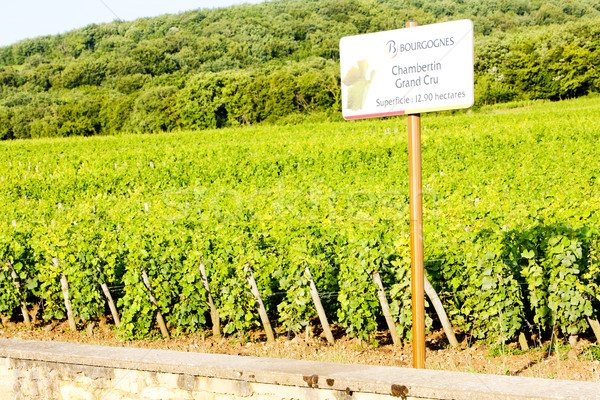 grand cru vineyards Chambertin, Burgundy, France Stock photo © phbcz