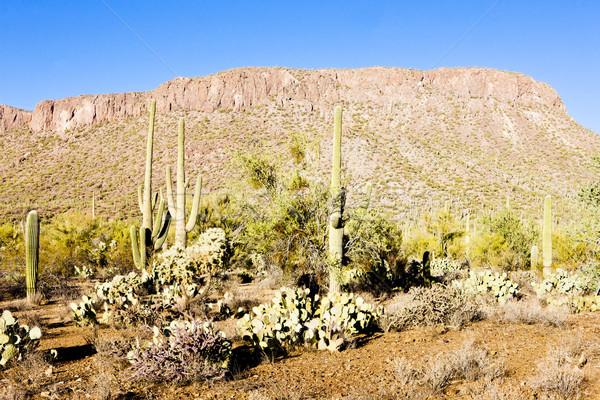 Park Arizona USA Landschaft Anlage Schweigen Stock foto © phbcz