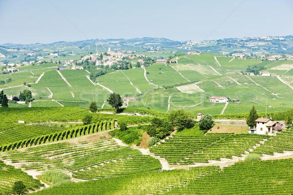 vineyars near Barolo, Piedmont, Italy Stock photo © phbcz