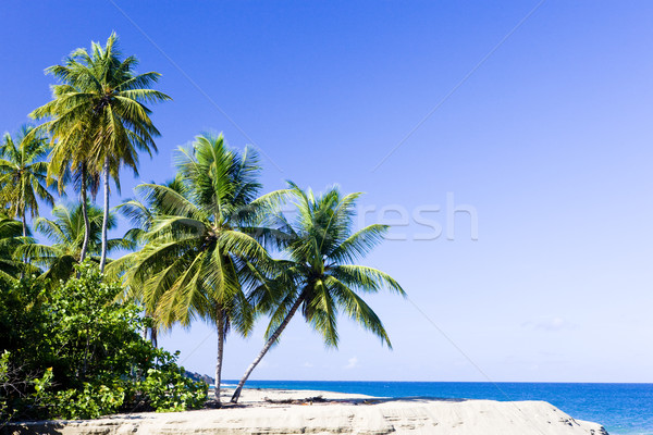 Western coast of Tobago Stock photo © phbcz