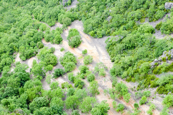 Vegetation Frankreich Baum Natur Bäume grünen Stock foto © phbcz