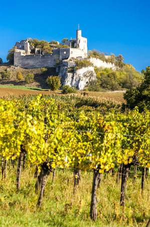 ruins of Falkenstein Castle with vineyard in autumn, Lower Austr Stock photo © phbcz