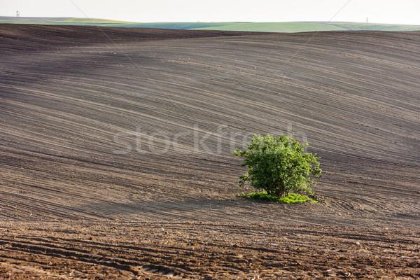 области дерево южный Чешская республика Сток-фото © phbcz