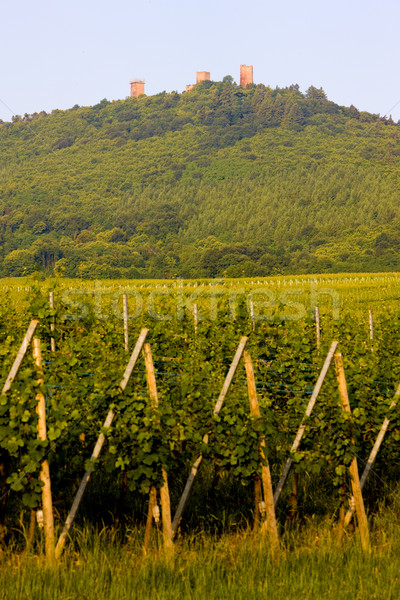 ruins of castle and vineyards near Eguishem, Alsace, France Stock photo © phbcz