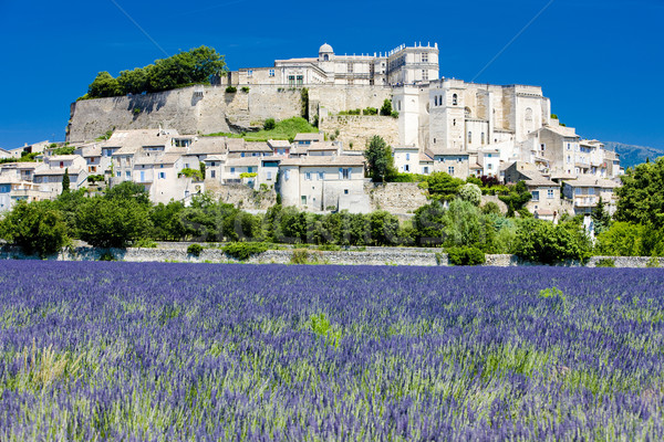 Lavendel veld bloem huis gebouwen architectuur planten Stockfoto © phbcz