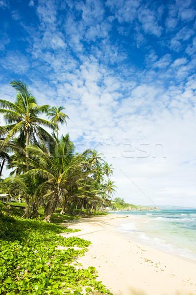 Martin's Bay, Barbados, Caribbean Stock photo © phbcz