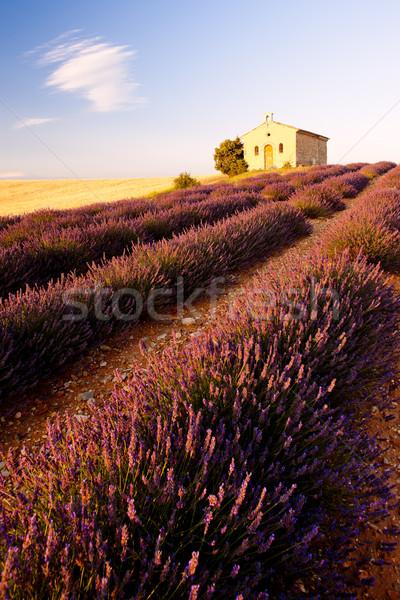 Kápolna levendula mező fennsík épület építészet növény Stock fotó © phbcz