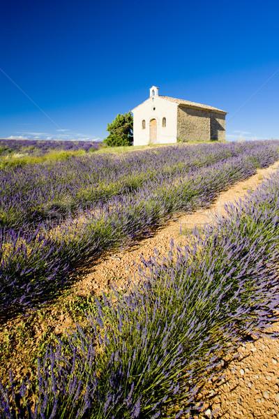 Kápolna levendula mező fennsík virág épület mező Stock fotó © phbcz