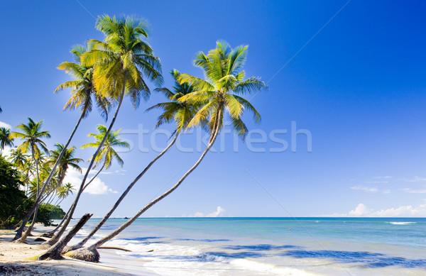Noordelijk kust caribbean boom landschap zee Stockfoto © phbcz