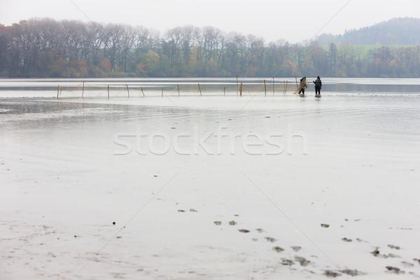 Aratás tavacska Csehország férfi munka halászat Stock fotó © phbcz