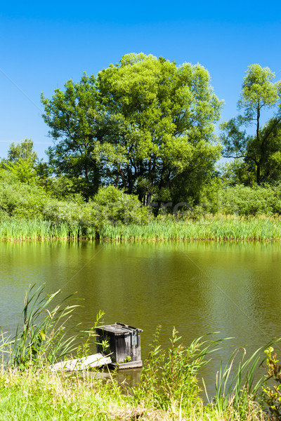 Gölet Çek Cumhuriyeti su doğa yeşil doğal Stok fotoğraf © phbcz