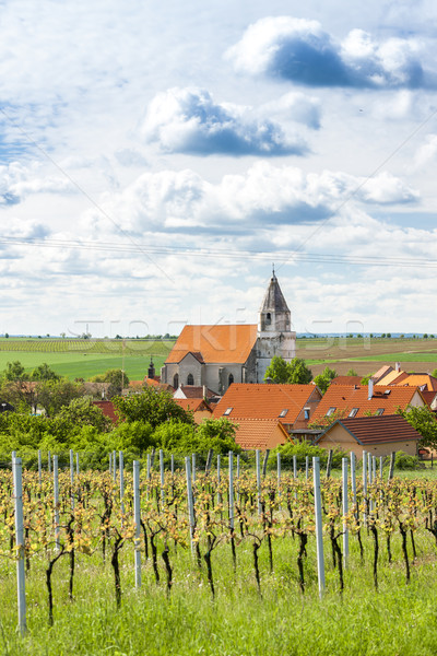 Hnanice with spring vineyard, Czech Republic Stock photo © phbcz