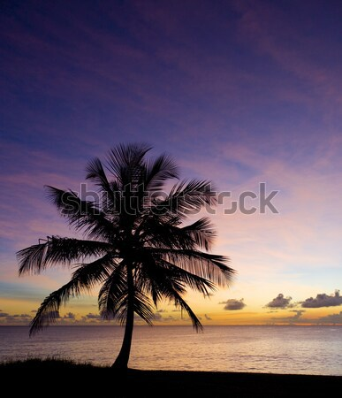 sunset over Caribbean Sea, Barbados Stock photo © phbcz