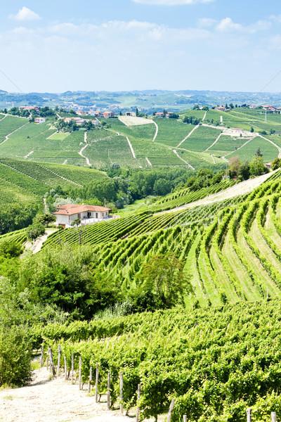 Stockfoto: Italië · land · wijnstok · landbouw · natuurlijke · buitenshuis