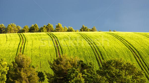 Tavasz mező fák fennsík Franciaország fa Stock fotó © phbcz