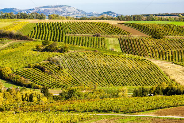 autumnal vineyards near Falkenstein, Lower Austria, Austria Stock photo © phbcz