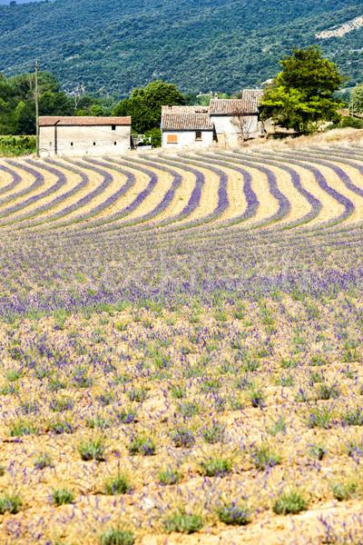 Stockfoto: Lavendel · veld · Frankrijk · natuur · reizen · plant · lavendel