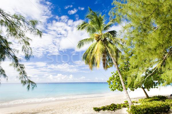 ストックフォト: ビーチ · バルバドス · カリビアン · ツリー · 風景