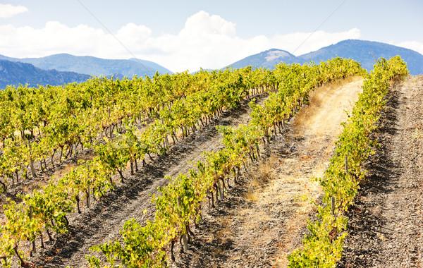 vineyars near Saint-Paul-de-Fenouillet, Languedoc-Roussillon, Fr Stock photo © phbcz