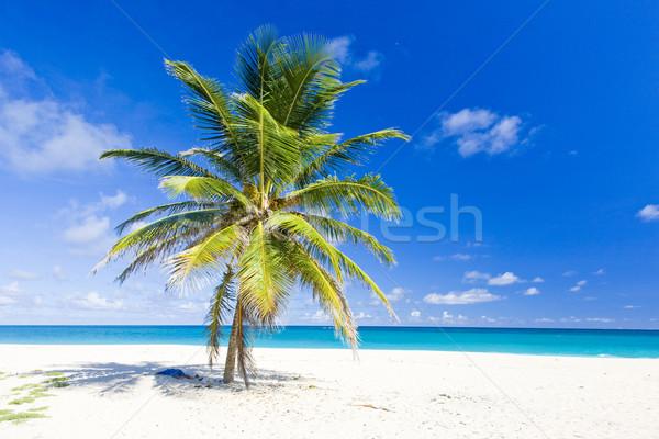 ストックフォト: バルバドス · カリビアン · ツリー · 風景 · 海 · 夏