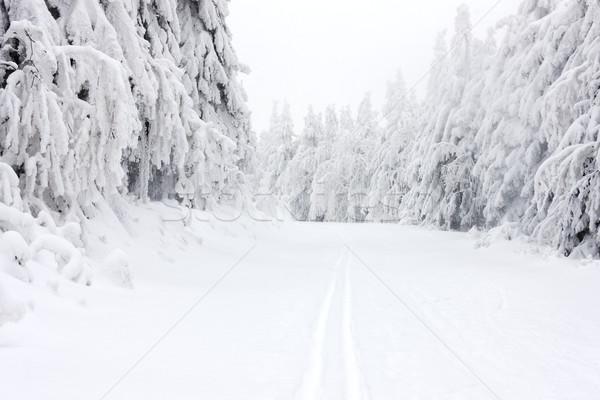 Winter landschap bergen Tsjechische Republiek boom sneeuw Stockfoto © phbcz