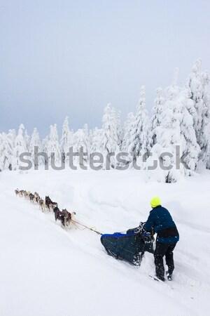 Trenó longo República Checa árvore cão homem Foto stock © phbcz