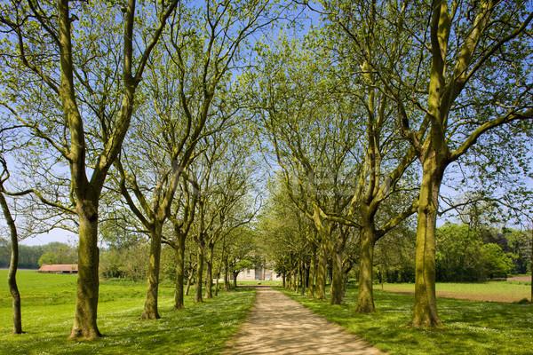 Beco França árvore natureza plantas caminho Foto stock © phbcz