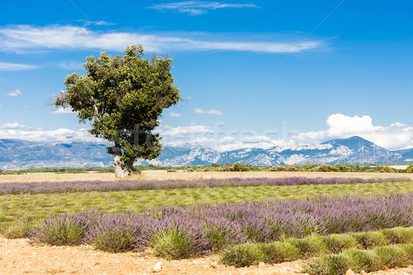 дерево плато природы завода сельского хозяйства Сток-фото © phbcz
