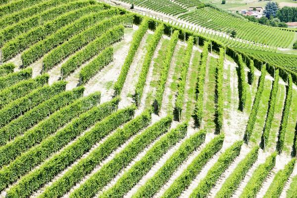 İtalya arka plan Avrupa asma tarım doğal Stok fotoğraf © phbcz