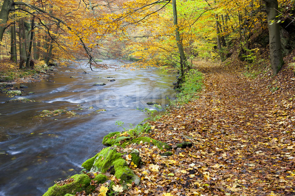 Folyó ősz Csehország víz erdő természet Stock fotó © phbcz