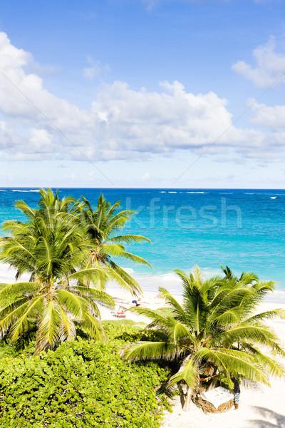 Fundo Barbados caribbean árvore paisagem mar Foto stock © phbcz