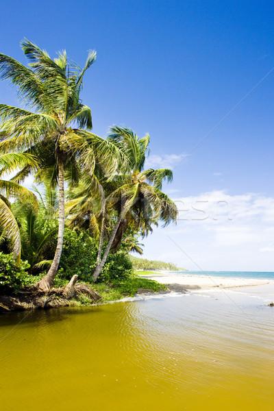 Grenada fa tájkép tenger nyár pálma Stock fotó © phbcz