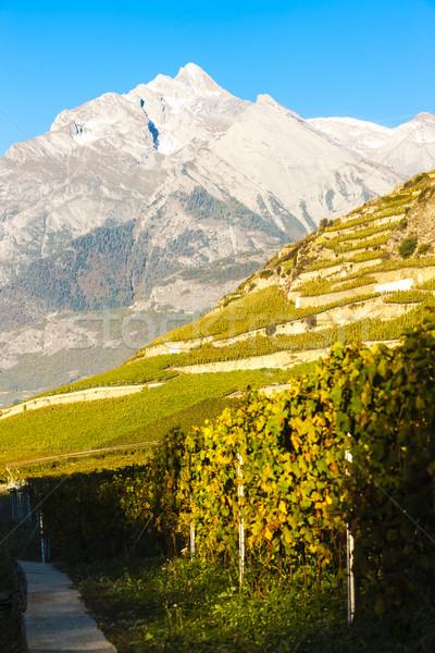 Szwajcaria krajobraz podróży góry roślin Europie Zdjęcia stock © phbcz