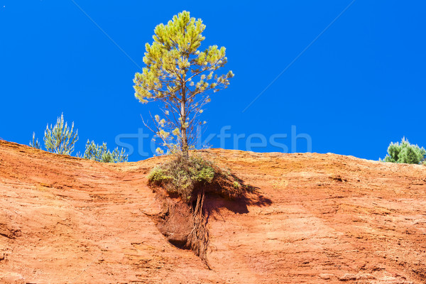 Colorado Fransa ağaç seyahat kaya Avrupa Stok fotoğraf © phbcz