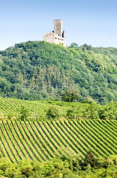 vineyards with castle Ortenbourg, Alsace, France Stock photo © phbcz