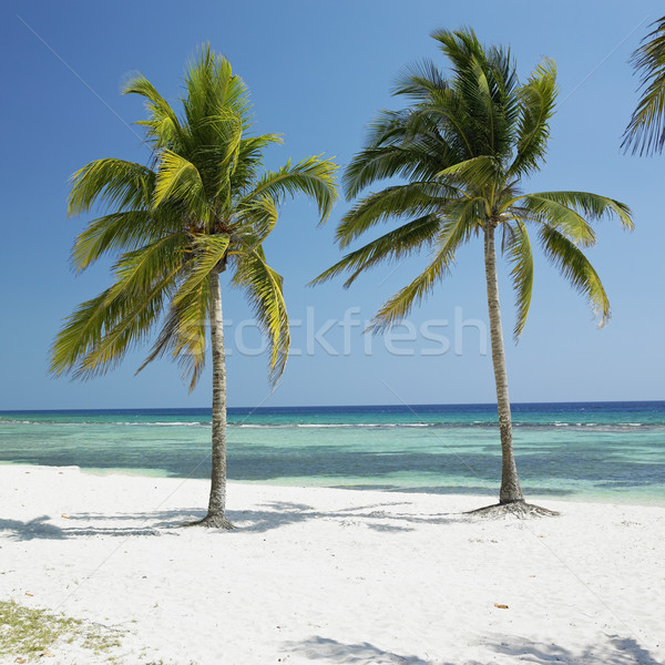 Playa Gir Stock photo © phbcz