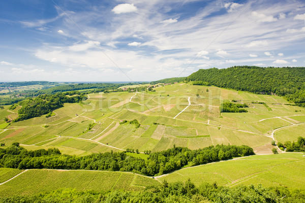 vineyards near Chateau Chalon, D Stock photo © phbcz