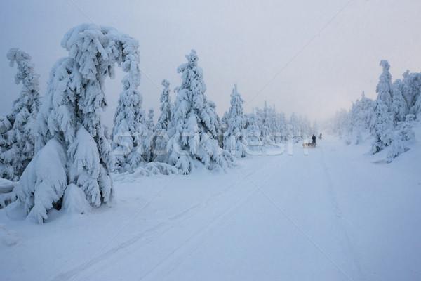 Inverno paisagem montanhas República Checa árvore neve Foto stock © phbcz