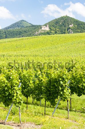 spring orchard and Palava at background, Czech Republic Stock photo © phbcz