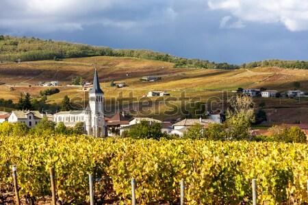 Chenas with vineyard, Beaujolais, Rhone-Alpes, France Stock photo © phbcz
