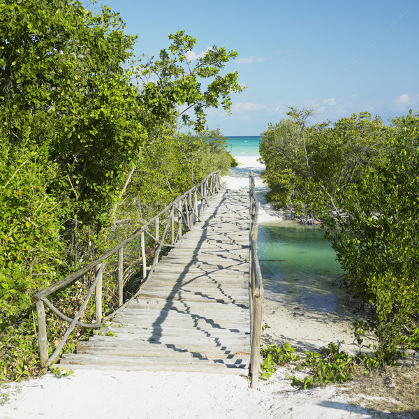 path towards Larga beach, Cayo Coco, Cuba Stock photo © phbcz