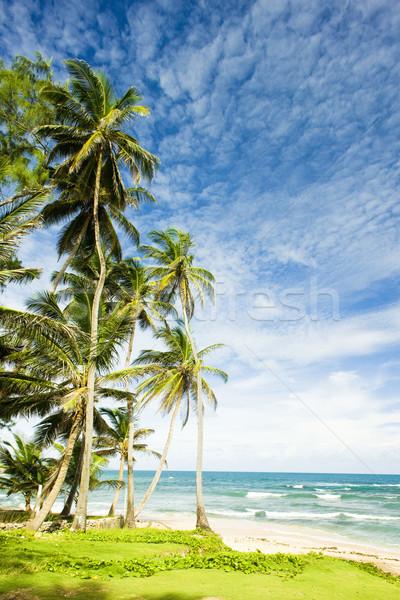 Stock photo: Martin's Bay, Barbados, Caribbean