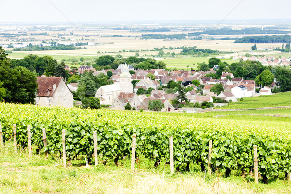 grand cru vineyard near Fixin, Cote de Nuits, Burgundy, France Stock photo © phbcz