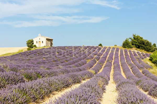 Stock photo: chapel with lavender field, Plateau de Valensole, Provence, Fran
