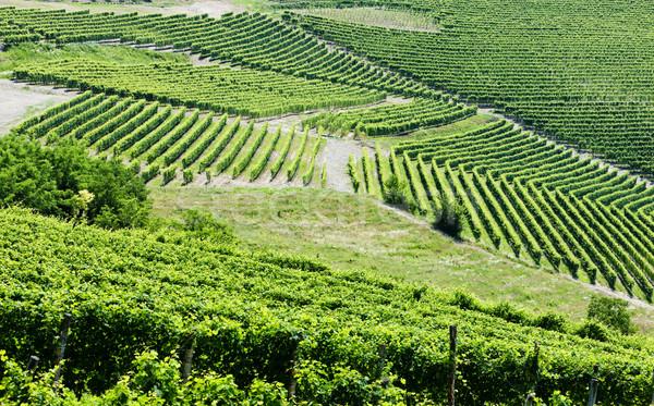 Stockfoto: Italië · achtergrond · Europa · wijnstok · landbouw · natuurlijke