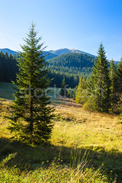 Laag Slowakije boom landschap reizen plant Stockfoto © phbcz