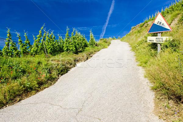 grand cru vineyard, Cote Rotie, Rhone-Alpes, France Stock photo © phbcz