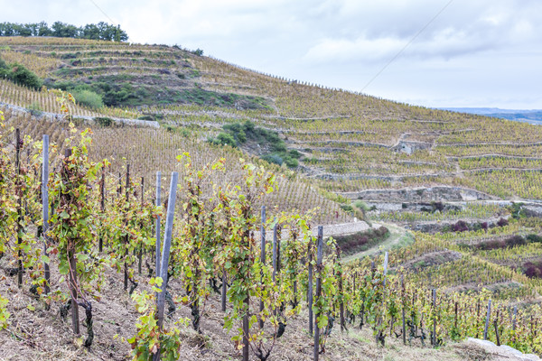 Szőlőskert Franciaország utazás vidék szőlő mezőgazdaság Stock fotó © phbcz