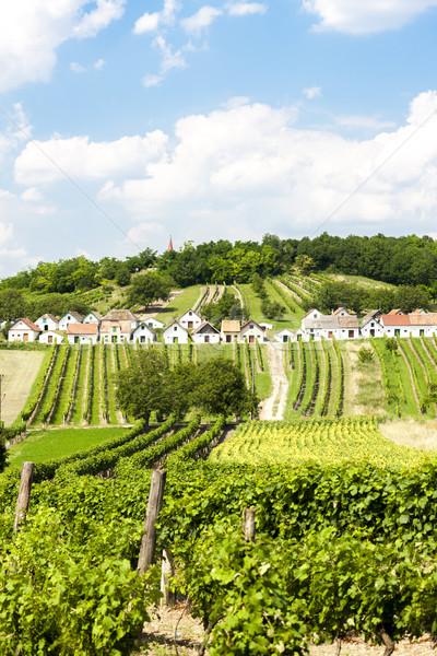 şarap düşük Avusturya mimari ülke asma Stok fotoğraf © phbcz