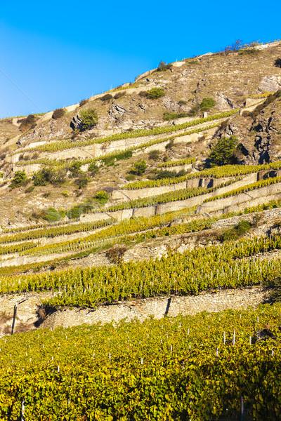 vineyard in Sion region, canton Valais, Switzerland Stock photo © phbcz